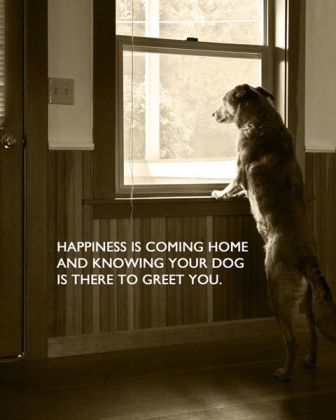 247 Relax and Succeed - Happiness is coming home