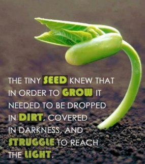 323 Relax and Succeed - The tiny seed