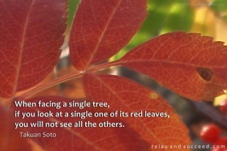 619 Relax and Succeed - When facing a single tree