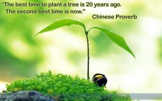 783 Relax and Succeed - The best time to plant a tree