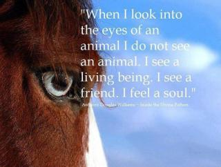932 Relax and Succeed - When I look into the eyes of an animal