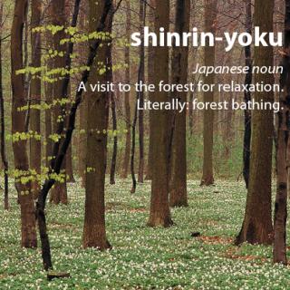 967 Relax and Succeed - Shinrin yoku