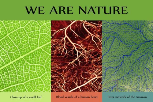 968 FD Relax and Succeed - We are nature
